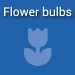flowerbulbs_concept
